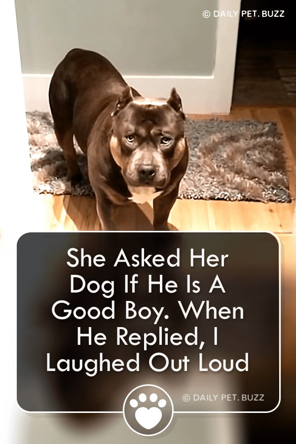 She Asked Her Dog If He Is A Good Boy. When He Replied, I Laughed Out Loud