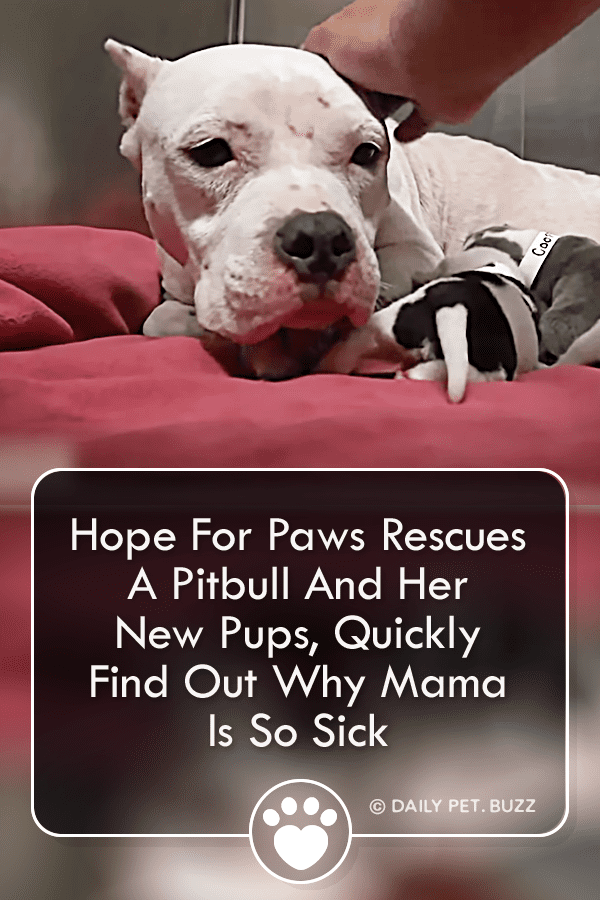 Hope For Paws Rescues A Pitbull And Her New Pups, Quickly Find Out Why Mama Is So Sick