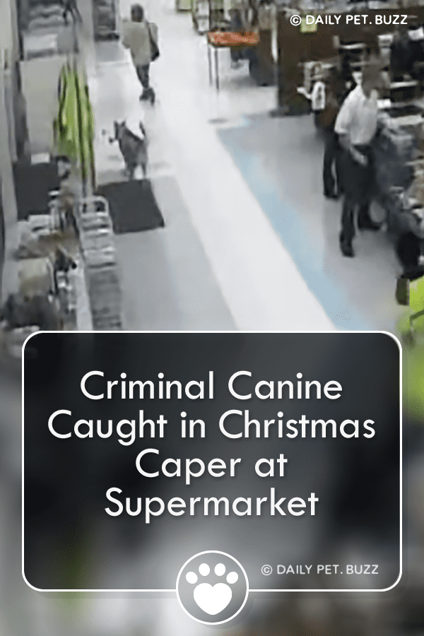 Criminal Canine Caught in Christmas Caper at Supermarket