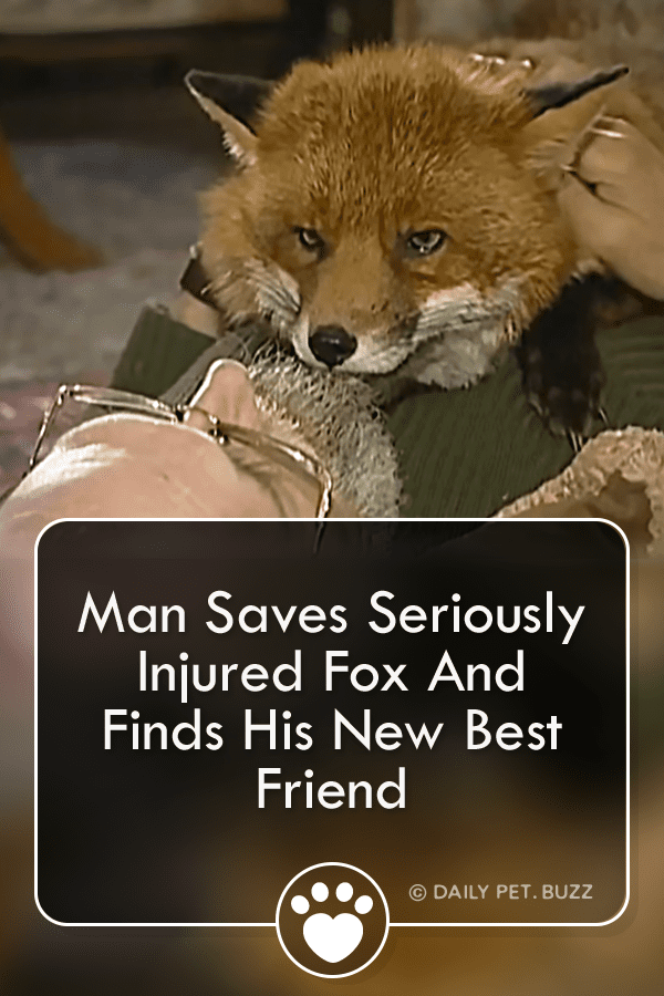 Man Who Saved Wounded Fox Finds His New Best Friend