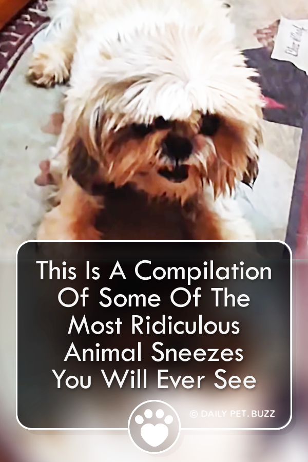 This Is A Compilation Of Some Of The Most Ridiculous Animal Sneezes You Will Ever See