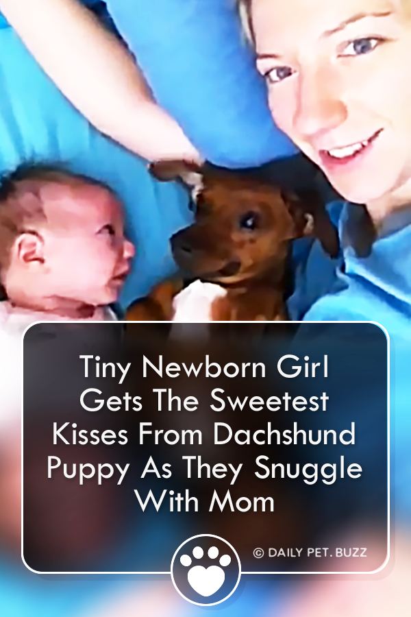 Tiny Newborn Girl Gets The Sweetest Kisses From Dachshund Puppy As They Snuggle With Mom