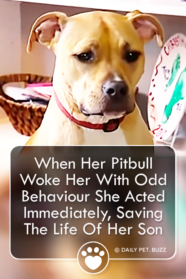 When Her Pitbull Woke Her With Odd Behaviour She Acted Immediately, Saving The Life Of Her Son