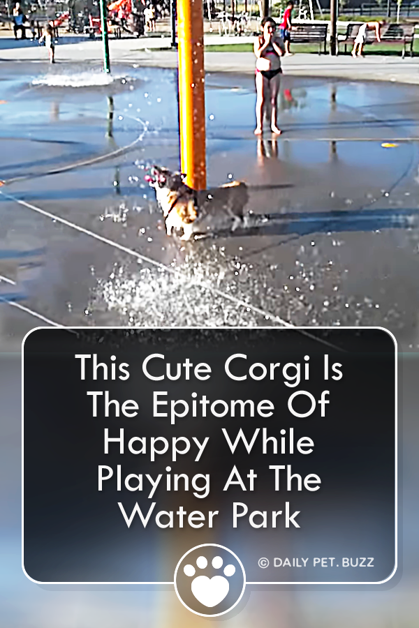 This Cute Corgi Is The Epitome Of Happy While Playing At The Water Park