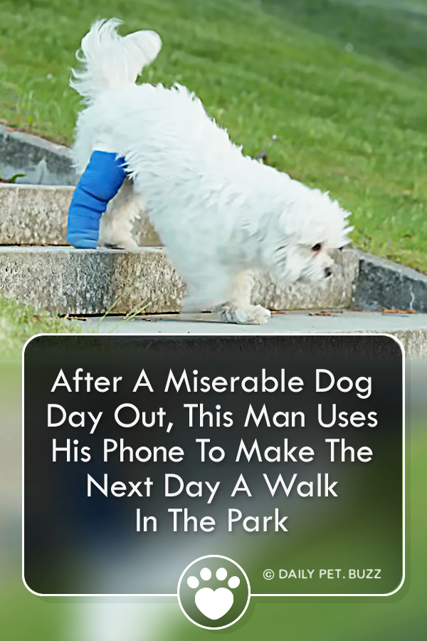 After A Miserable Dog Day Out, This Man Uses His Phone To Make The Next Day A Walk In The Park