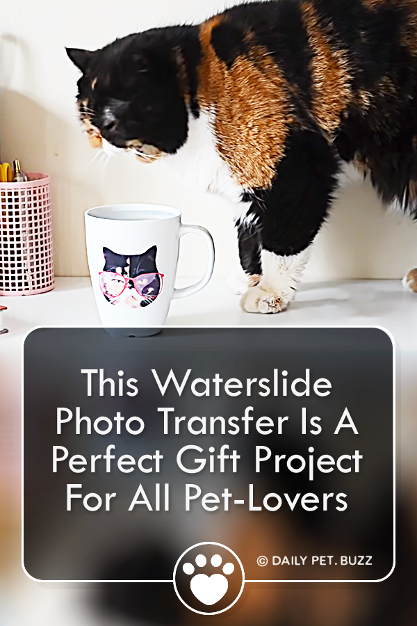 This Waterslide Photo Transfer Is A Perfect Gift Project For All Pet-Lovers