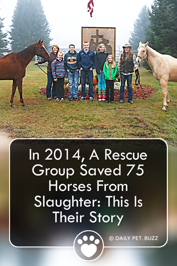 In 2014, A Rescue Group Saved 75 Horses From Slaughter: This Is Their Story