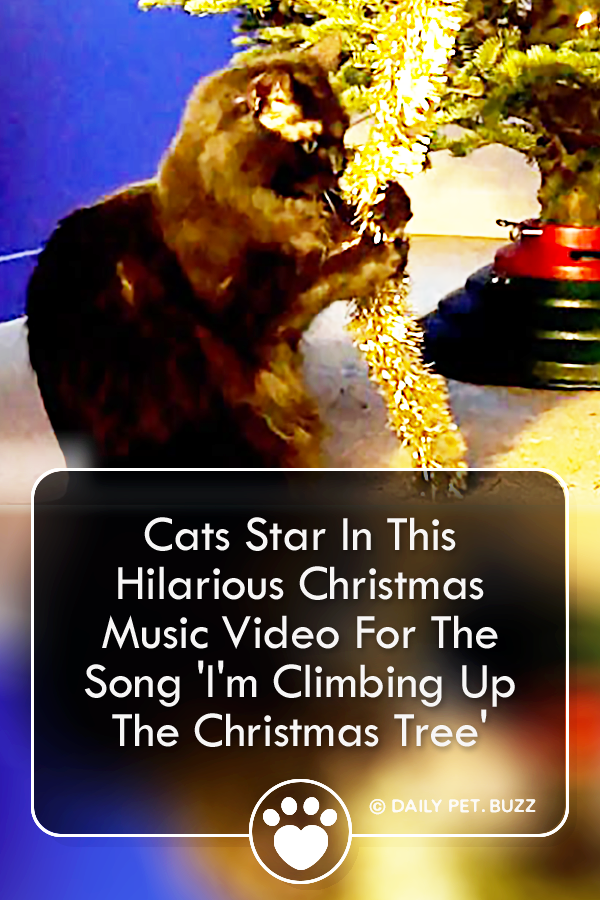 Cats Star In This Hilarious Christmas Music Video For The Song \'I\'m Climbing Up The Christmas Tree\'