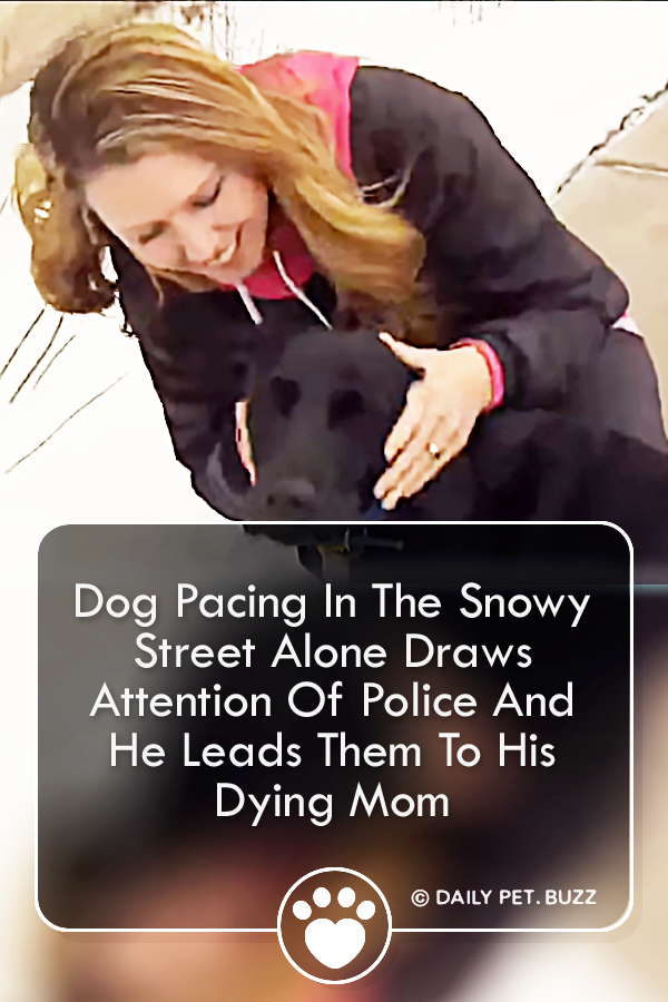Dog Pacing In The Snowy Street Alone Draws Attention Of Police And He Leads Them To His Dying Mom