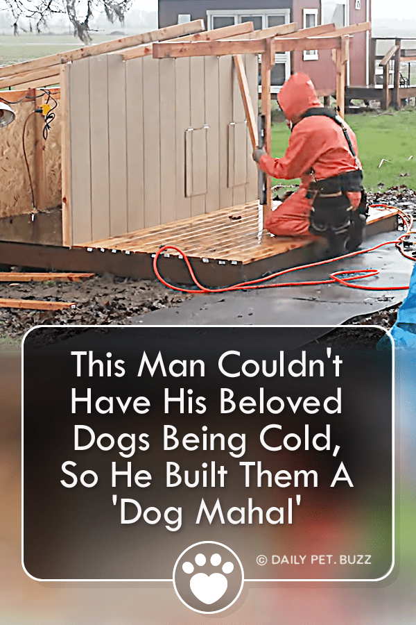 This Man Couldn\'t Have His Beloved Dogs Being Cold, So He Built Them A \'Dog Mahal\'