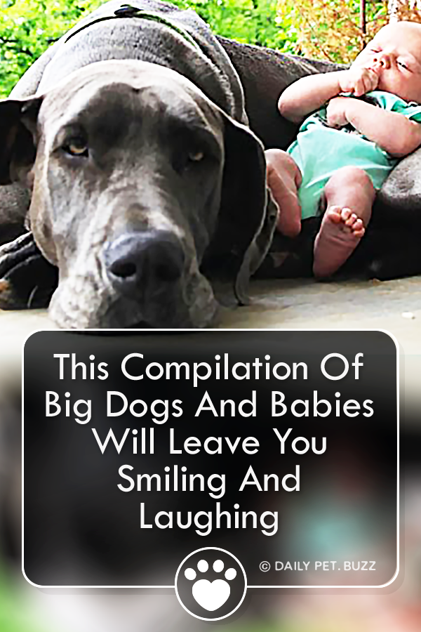 This Compilation Of Big Dogs And Babies Will Leave You Smiling And Laughing