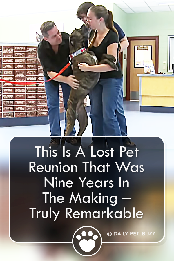 This Is A Lost Pet Reunion That Was Nine Years In The Making – Truly Remarkable