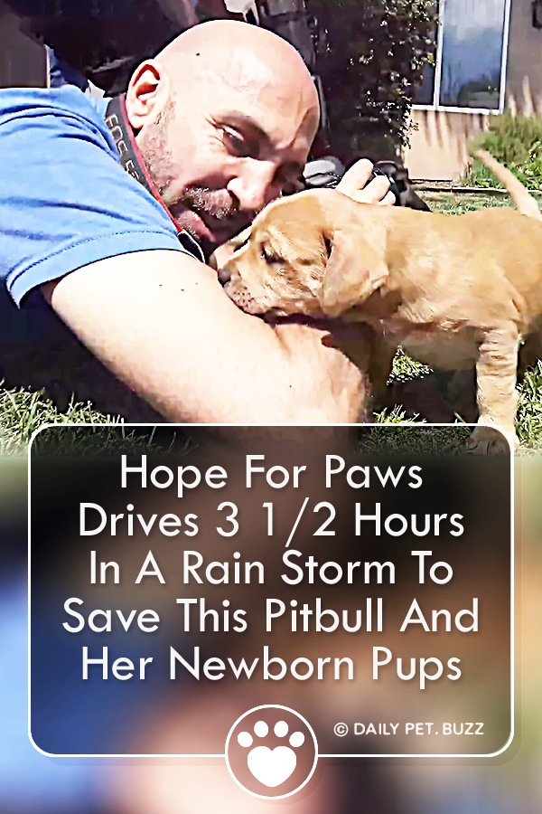 Hope For Paws Drives 3 1/2 Hours In A Rain Storm To Save This Pitbull And Her Newborn Pups