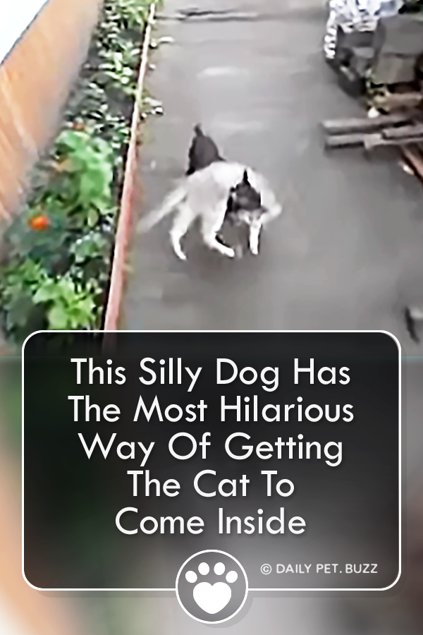 This Silly Dog Has The Most Hilarious Way Of Getting The Cat To Come Inside
