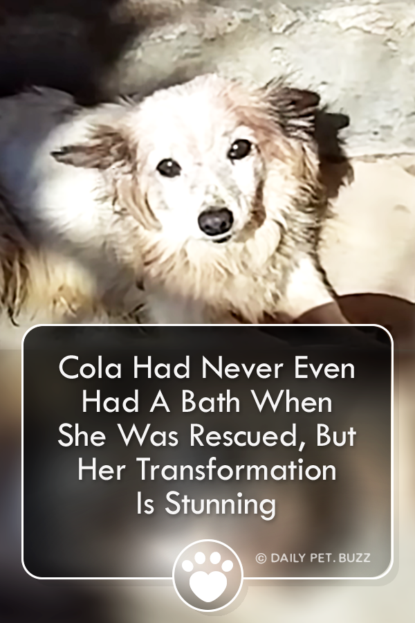 Cola Had Never Even Had A Bath When She Was Rescued, But Her Transformation Is Stunning