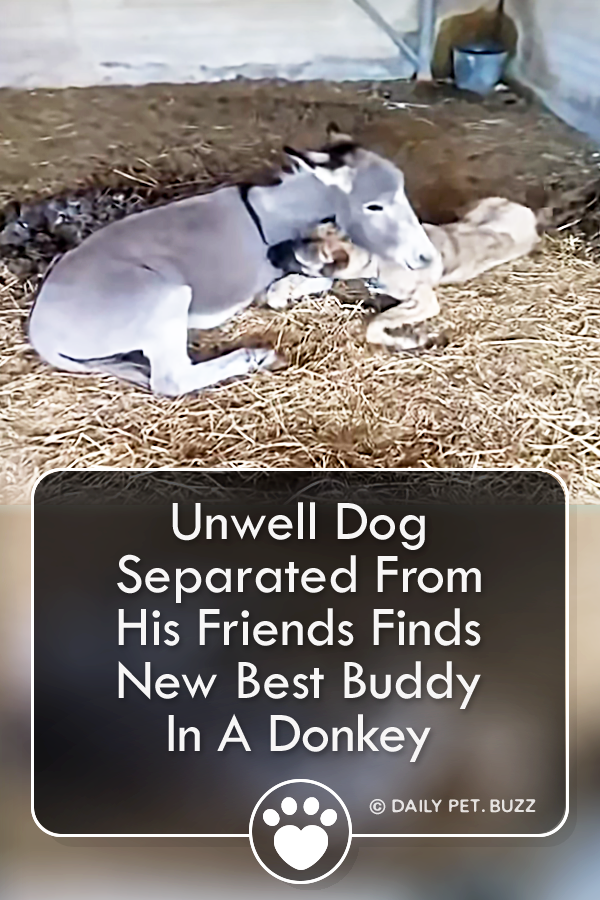 Unwell Dog Separated From His Friends Finds New Best Buddy In A Donkey