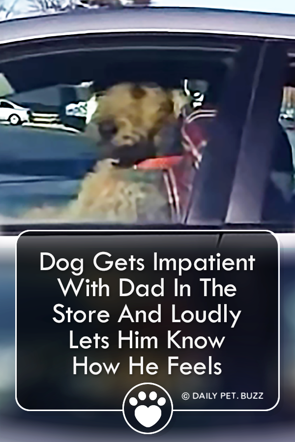 Dog Gets Impatient With Dad In The Store And Loudly Lets Him Know How He Feels