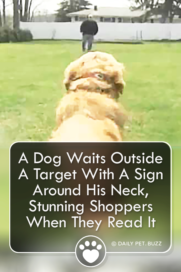 A Dog Waits Outside A Target With A Sign Around His Neck, Stunning Shoppers When They Read It
