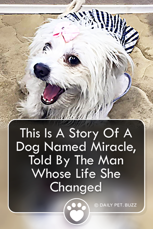This Is A Story Of A Dog Named Miracle, Told By The Man Whose Life She Changed