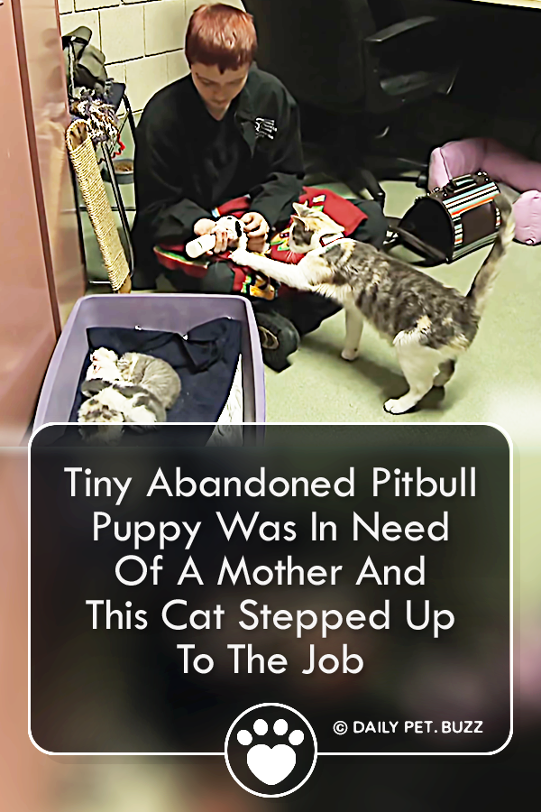 Tiny Abandoned Pitbull Puppy Was In Need Of A Mother And This Cat Stepped Up To The Job