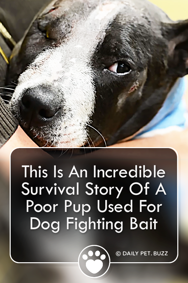 This Is An Incredible Survival Story Of A Poor Pup Used For Dog Fighting Bait