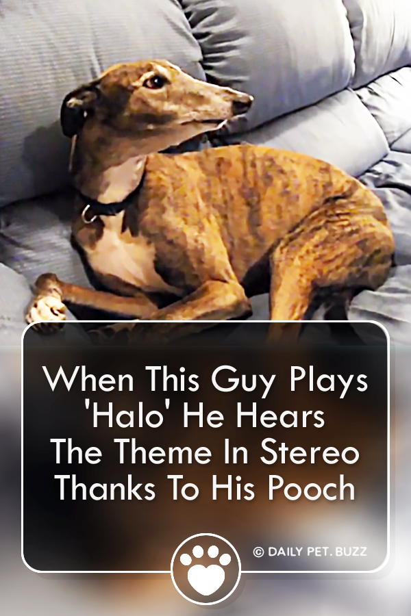 When This Guy Plays \'Halo\' He Hears The Theme In Stereo Thanks To His Pooch