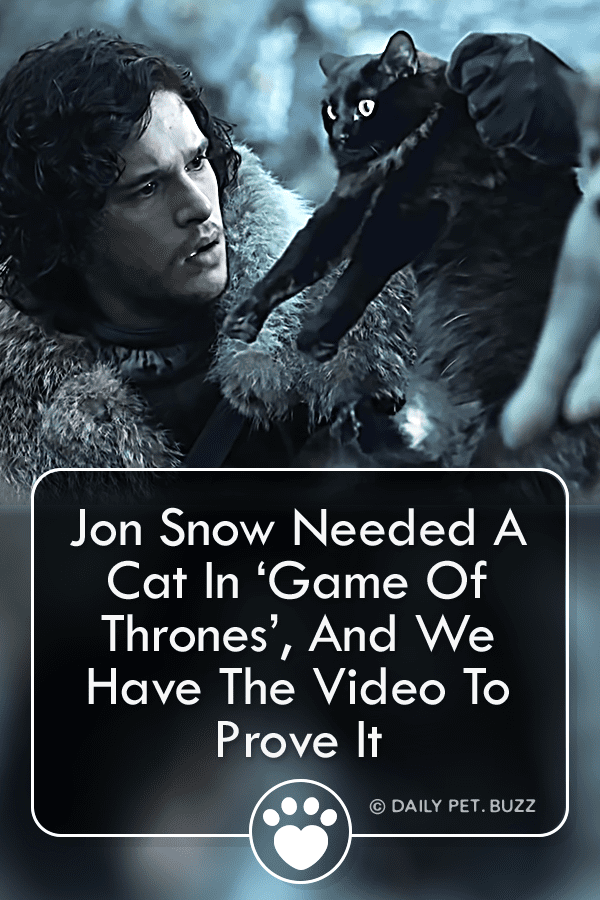 Jon Snow Needed A Cat In 'Game Of Thrones', And We Have The Video To Prove It