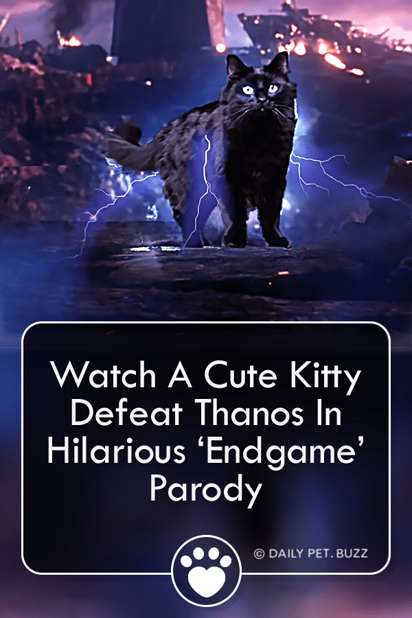 Watch A Cute Kitty Defeat Thanos In Hilarious 'Endgame' Parody