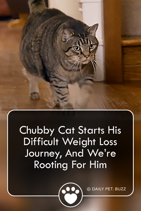 Chubby Cat Starts His Weight Loss Journey, And We're Rooting For Him