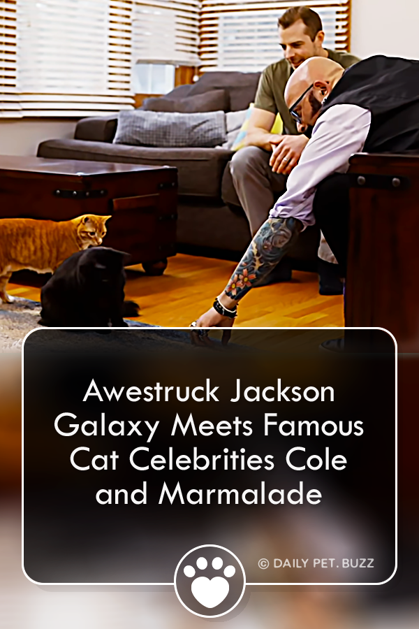 Awestruck Jackson Galaxy Meets Famous Cat Celebrities Cole and Marmalade