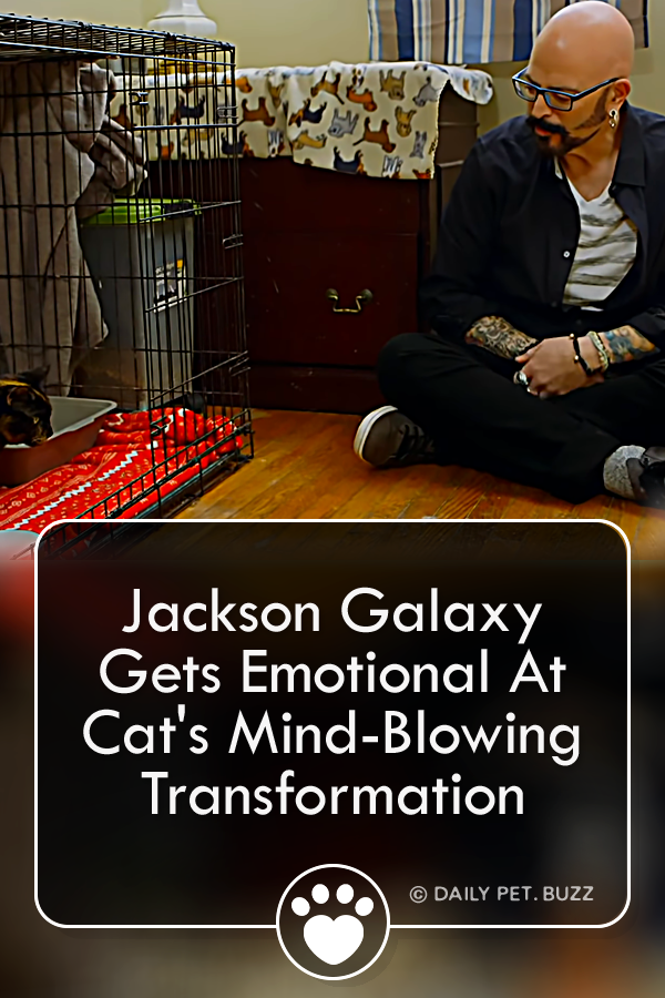 Jackson Galaxy Gets Emotional At Cat\'s Mind-Blowing Transformation