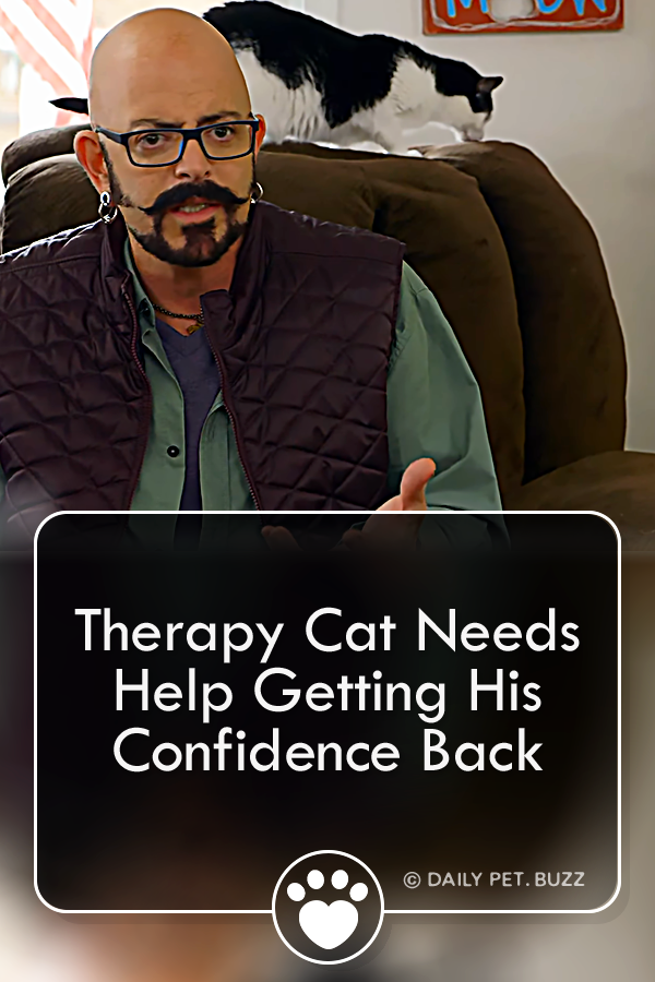 Therapy Cat Needs Help Getting His Confidence Back