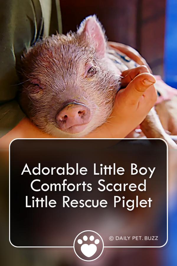 Adorable Little Boy Comforts Scared Little Rescue Piglet
