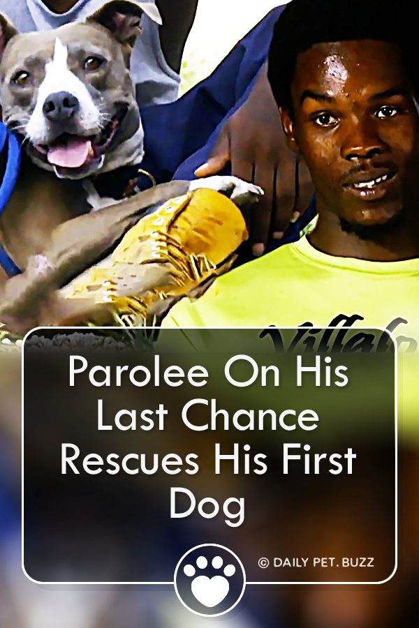 Parolee On His Last Chance Rescues His First Dog