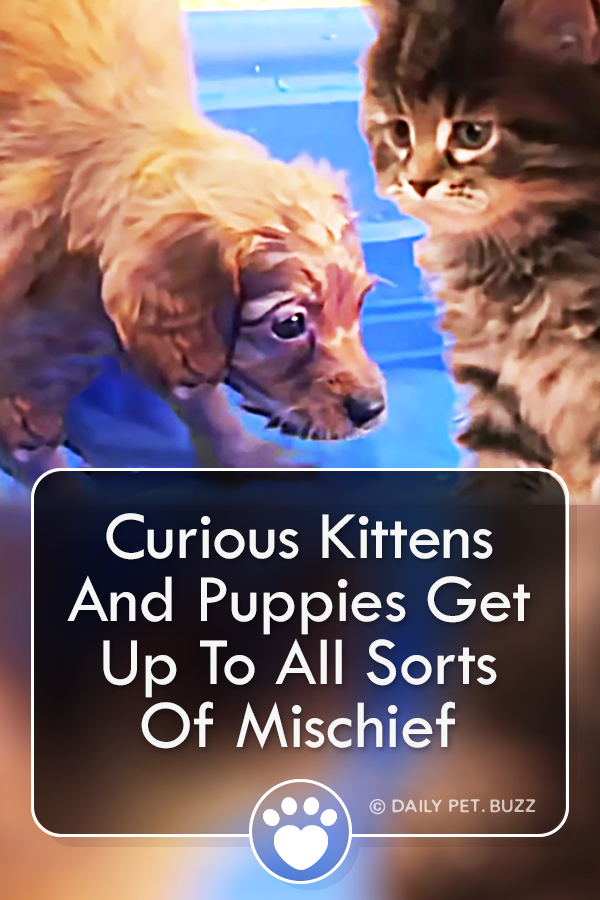 Curious Kittens And Puppies Get Up To All Sorts Of Mischief
