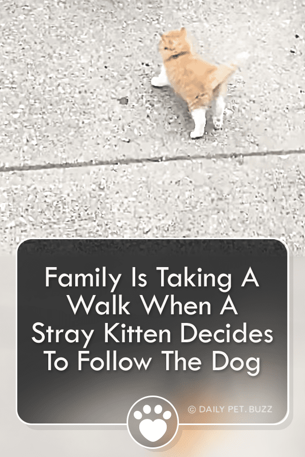 Family Is Taking A Walk When A Stray Kitten Decides To Follow The Dog Home