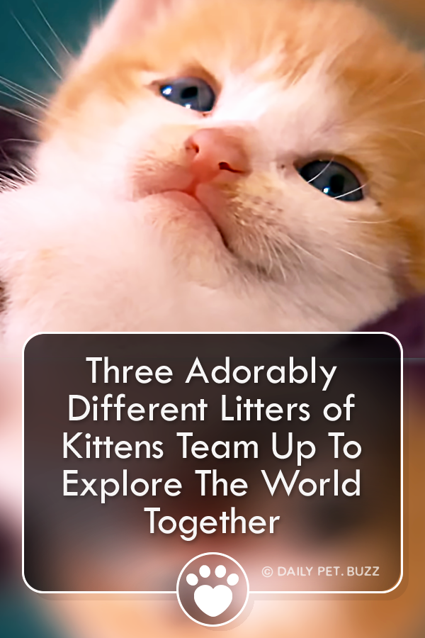 Three Adorably Different Litters of Kittens Team Up To Explore The World Together