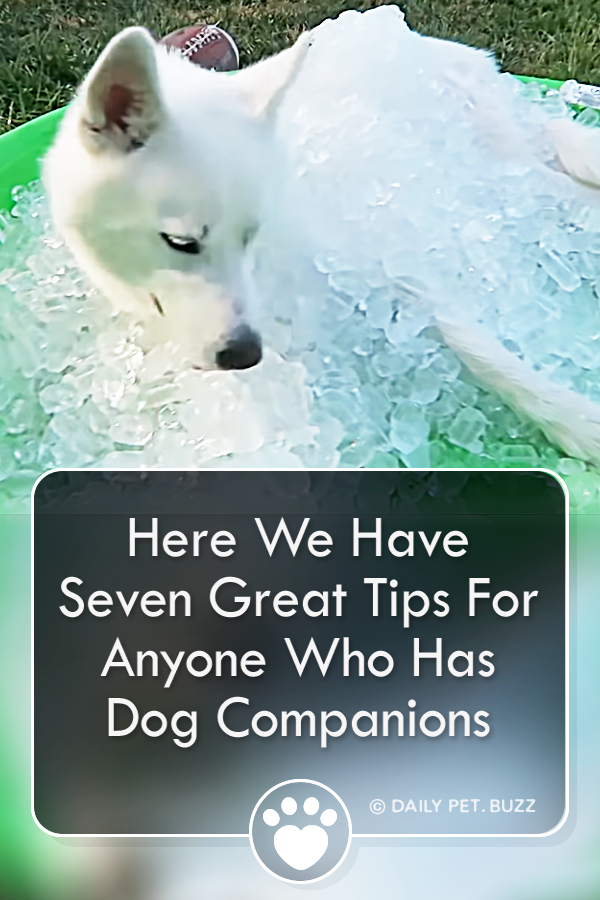 Here We Have Seven Great Tips For Anyone Who Has Dog Companions