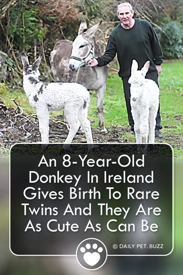 An 8-Year-Old Donkey In Ireland Gives Birth To Rare Twins And They Are As Cute As Can Be