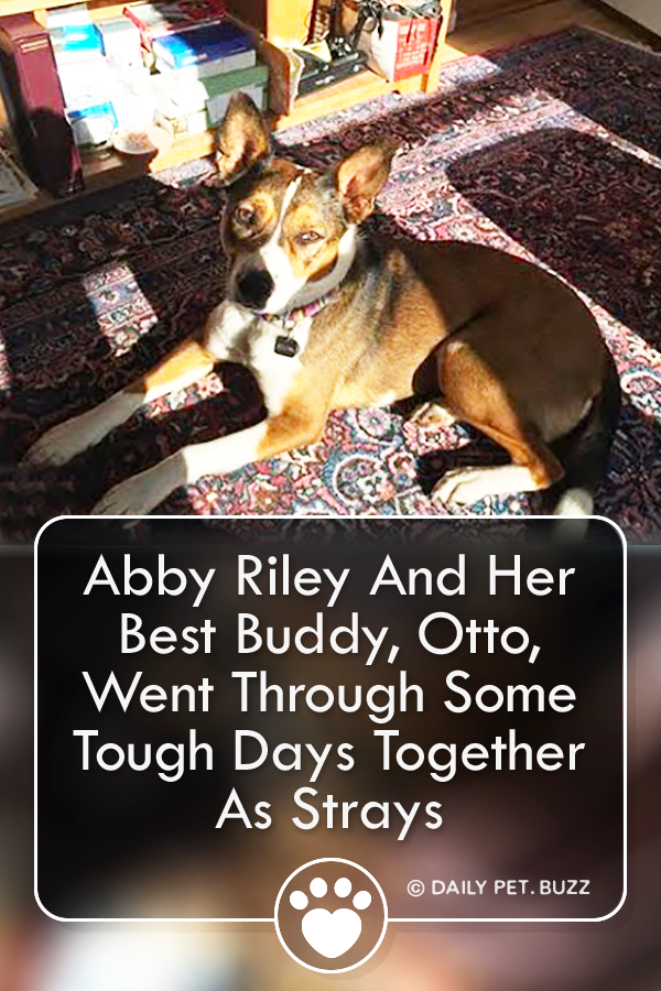 Abby Riley And Her Best Buddy, Otto, Went Through Some Tough Days Together As Strays