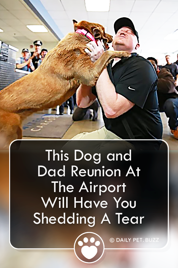 This Dog and Dad Reunion At The Airport Will Have You Shedding A Tear