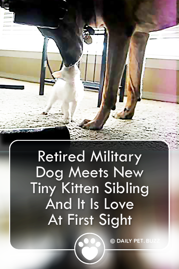 Retired Military Dog Meets New Tiny Kitten Sibling And It Is Love At First Sight