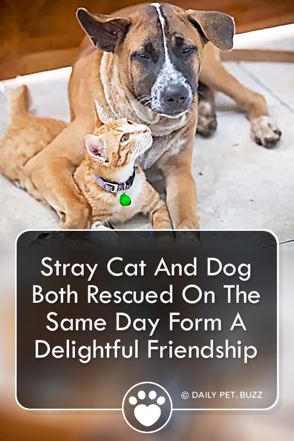 Stray Cat And Dog Both Rescued On The Same Day Form A Delightful Friendship