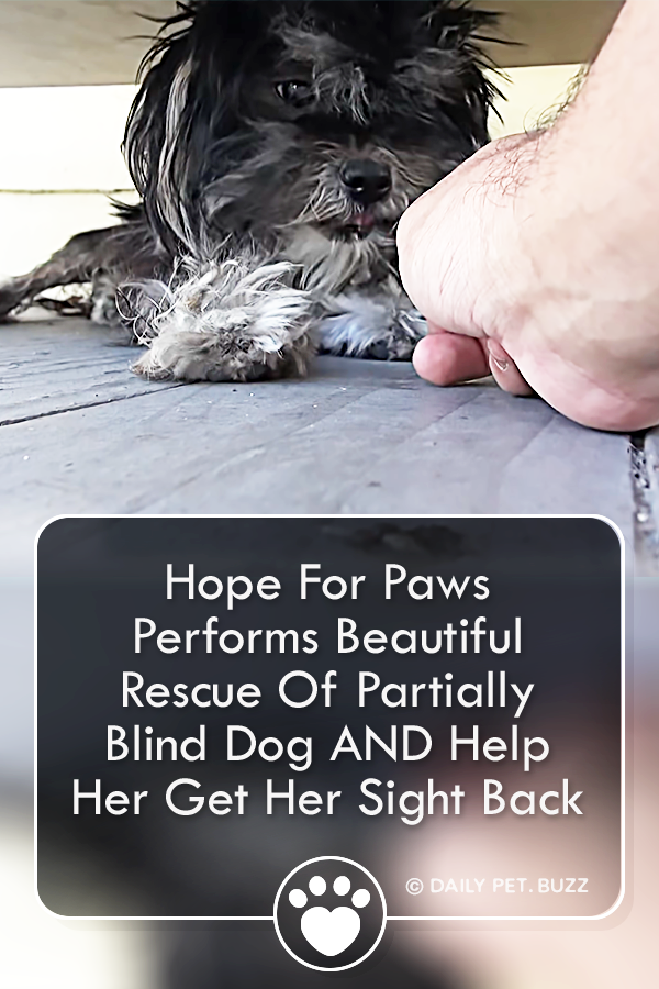Hope For Paws Performs Beautiful Rescue Of Partially Blind Dog AND Help Her Get Her Sight Back