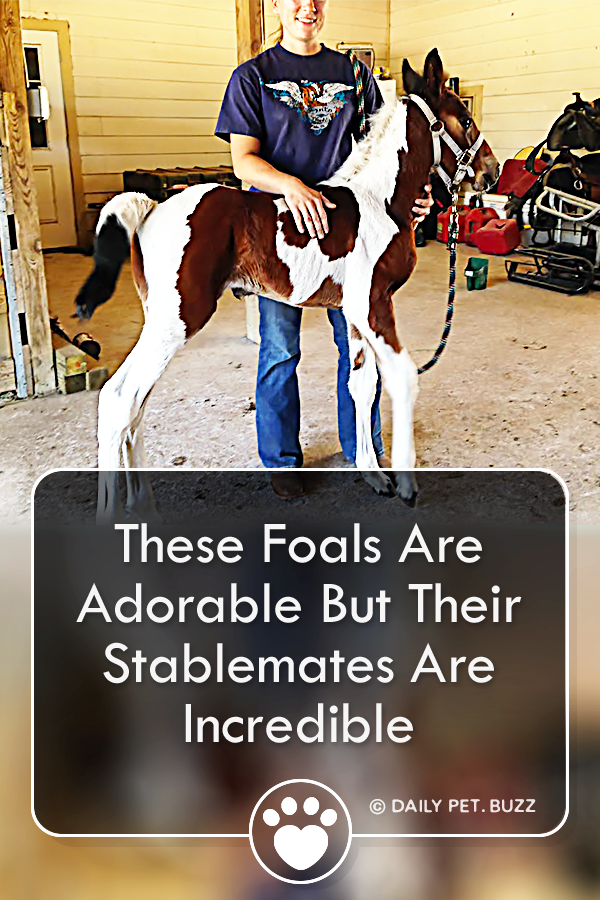 These Foals Are Adorable But Their Stablemates Are Incredible