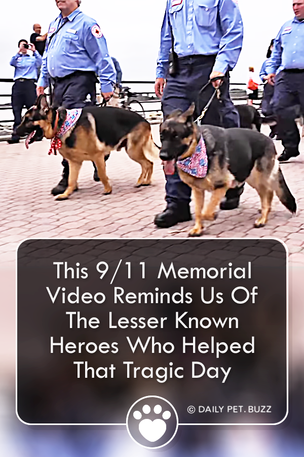 This 9/11 Memorial Video Reminds Us Of The Lesser Known Heroes Who Helped That Tragic Day