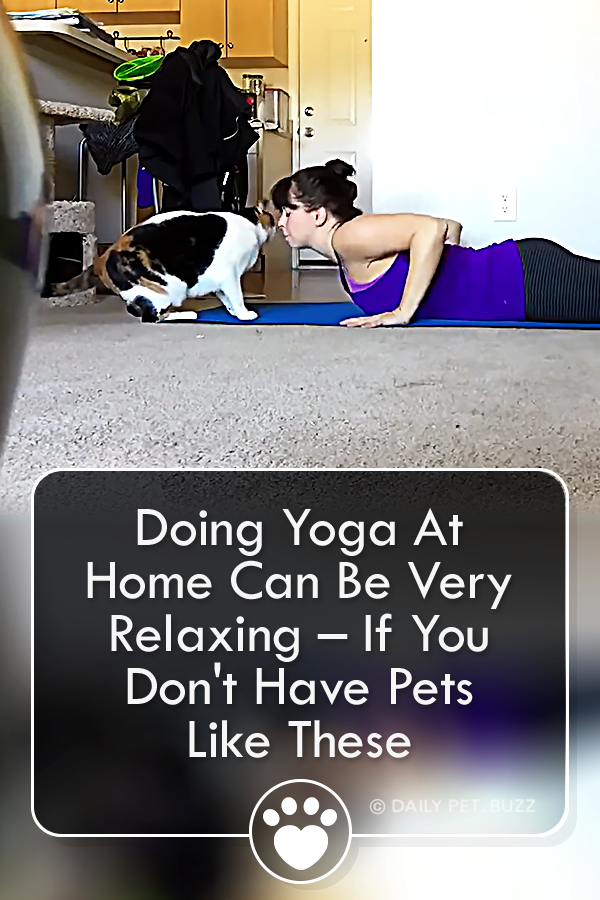 Doing Yoga At Home Can Be Very Relaxing – If You Don\'t Have Pets Like These