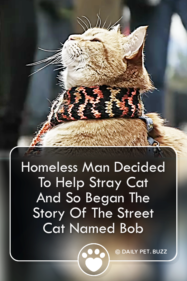 Homeless Man Decided To Help Stray Cat And So Began The Story Of The Street Cat Named Bob