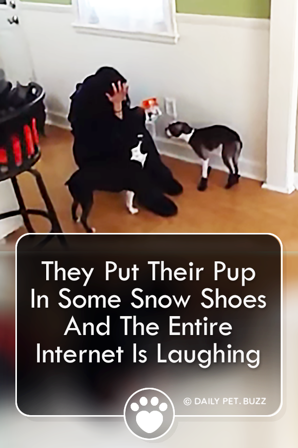 They Put Their Pup In Some Snow Shoes And The Entire Internet Is Laughing