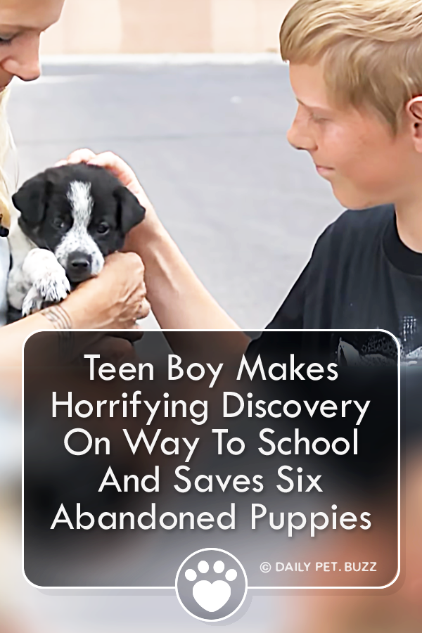 Teen Boy Makes Horrifying Discovery On Way To School And Saves Six Abandoned Puppies
